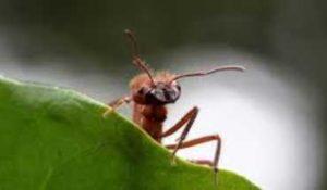 Aurobotice Insect