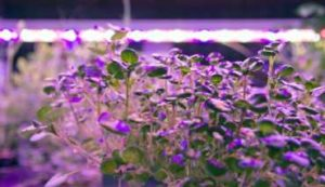 Aurobotics LED